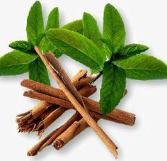 Cinnamon-Leaf-Oil.jpg